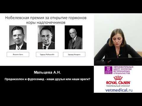 Мальцева А. Н. - Преднизолон и фуросемид – наши друзья или наши враги?