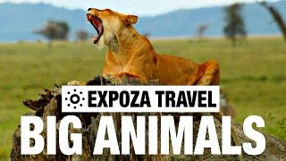 Big Animals (Africa) Vacation Travel Video Guide