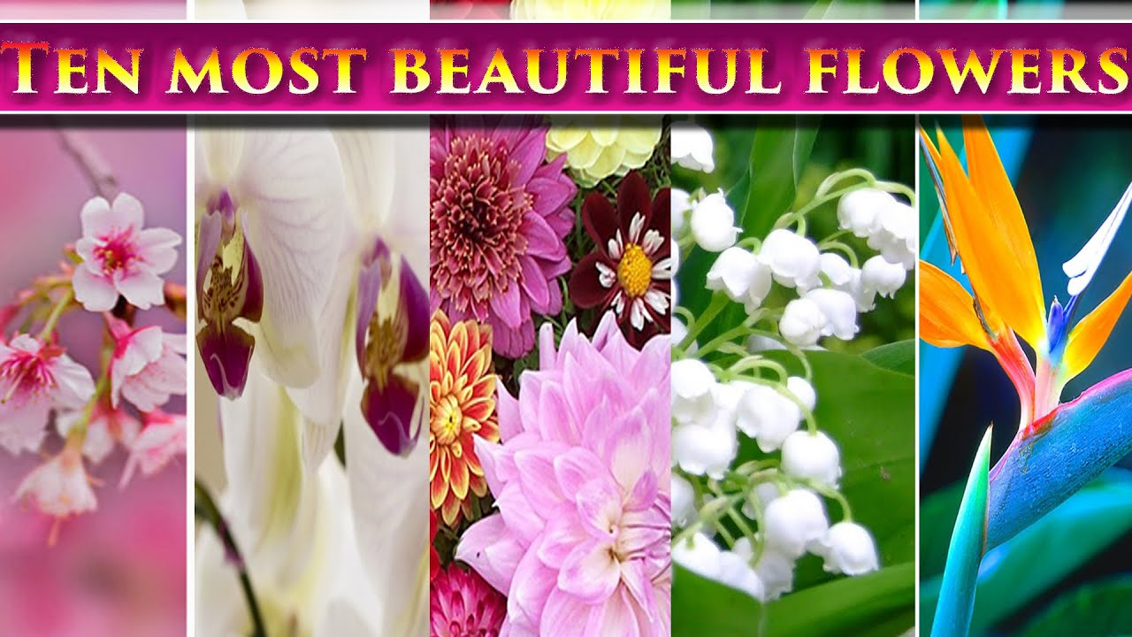 What Is The Most Expensive Flower In The World Another Beautiful