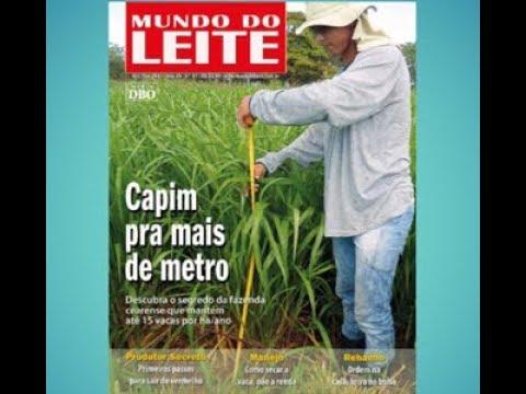Mundo do Leite mostra que no Nordeste tem pasto pra mais de metro