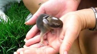 Baby Bunnies In My Yard