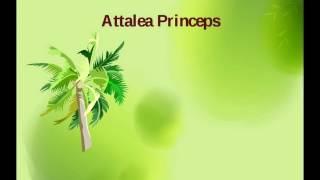 Аудиосказка Attalea princeps,В.Гаршин