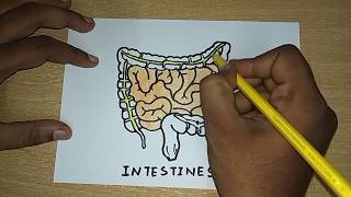 How to draw Intestines   Human Organs Drawing   Easy Step by Step Drawing for kids