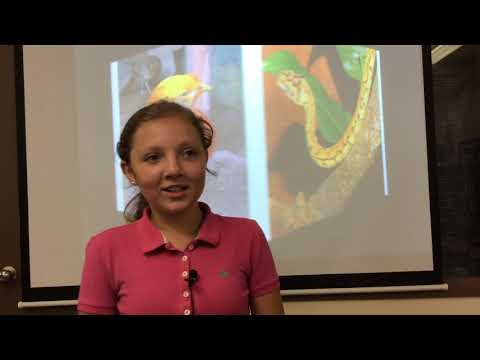 Do You Collect Hedgehogs? | Kenslee Santos | Chester County Middle School