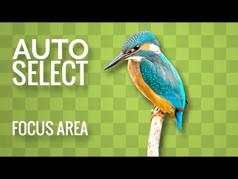 How to Auto-Select Objects or Areas in Focus in an Image in Photoshop CC 2017