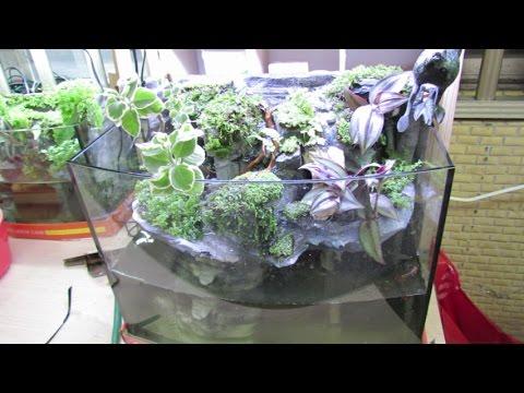 40公分魚缸改造成生態魚缸 - YouTube