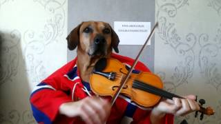 Funny Dog playing violin happy birthday to you