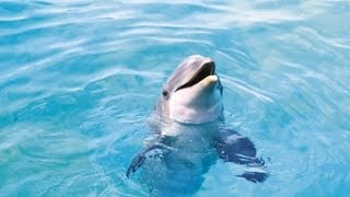Amazing Dolphin Show HD - ZooMarine