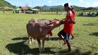 Video Barapan Kebo (Ta Liang _Serangin) download MP3, 3GP, MP4, WEBM, AVI, FLV Agustus 2018
