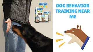 Dog Behavior Training Near Me