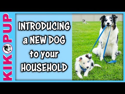 Introducing a NEW DOG to your dog
