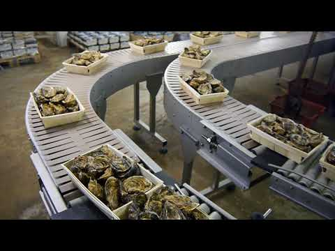 Chaîne d'emballage Huître MULOT -  Oyster Packaging chain
