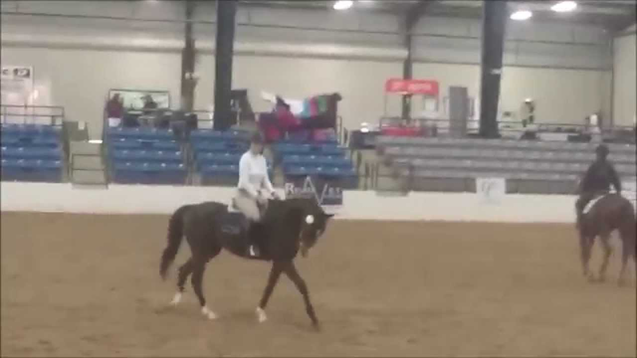 2015 Thoroughbred Makeover | NorthernGates Stables, Horse