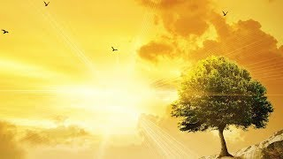 Peaceful Music, Relaxing Music, Instrumental Music 'Wilderness' by Tim Janis