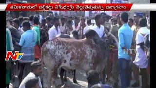 Download Hindi Video Songs - Supporters of Jallikattu Protest in Tamil Nadu || NTV