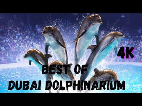 Dubai Dolphinarium Full Show | Best of Dubai Dolphin Show  | Seal Show | HD 4K | After Lockdown 2020