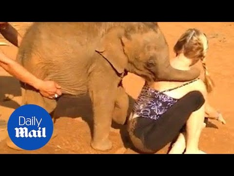 Cheeky baby elephant won't let American tourist go - Daily Mail