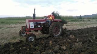 Repowered Farmall 504 Plowing and Discing