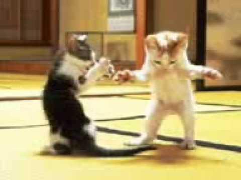 Кошки - танцоры