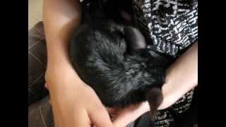 Foxy 2012 8:e Juli