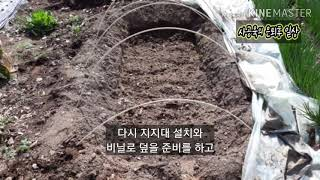 고구마 모종 싹키우기 준비 작업
