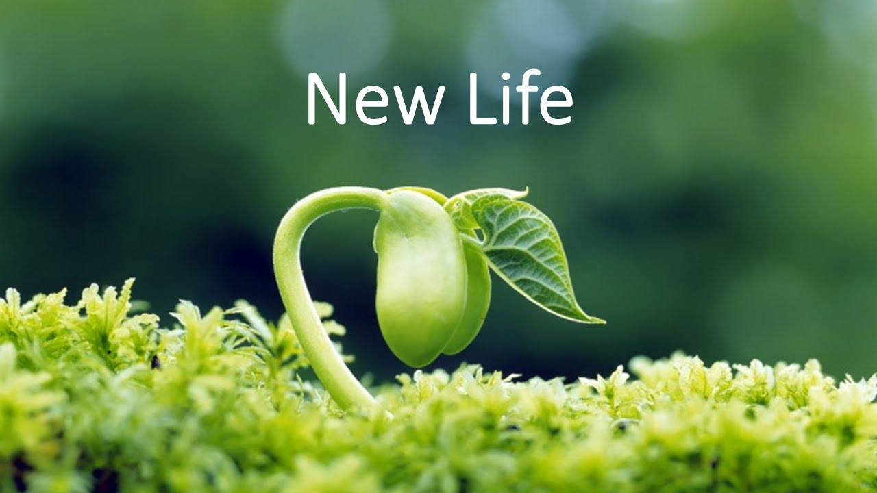 Life in the Spirit Seminar - A New Life - YouTube