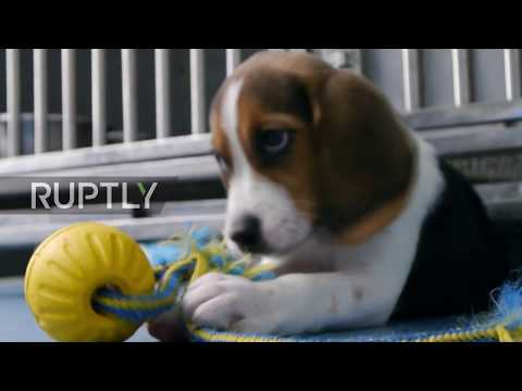 China: Scientists hope to bring DOG CLONING to a pet shop near you soon