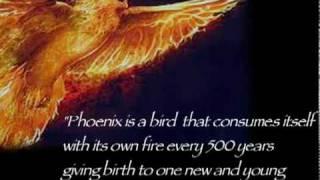 The Phoenix Constellation