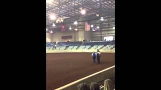 14YO Registered Blue Roan Tennessee Walking Horse. Retired padded p...