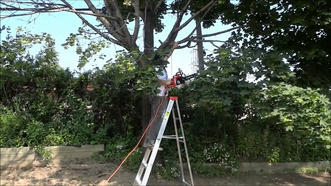 How To Cut A Tree Branch With A Chainsaw Diy Youtube