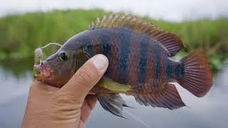 I-75 Topwater Bassfishing