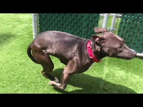 Ruby 26551 Being Bouncy NYCACC
