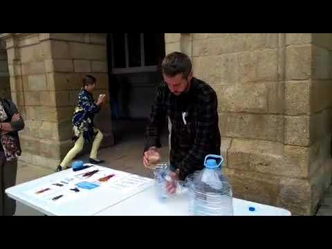 Arroxo explica cómo hacer una trampa casera para atrapar velutinas