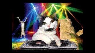 Коты поют мяу мяу мяу (Очень смешно)