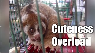 'Cuteness Overload!' - A promise story from because I said I would.