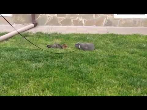 Cat playing with a cat, кошка, играющая с кошкой !!!!
