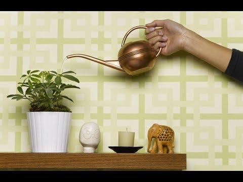 СЕМЬ МИФОВ об уходе за комнатными растениями | Информация для НАЧИНАЮЩИХ ЦВЕТОВОДОВ