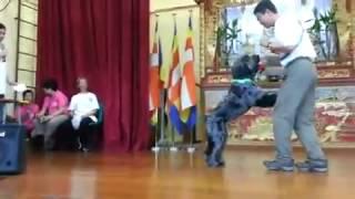 2013-10香港狗會愛犬組表演Part3 , 佛教筏可紀念