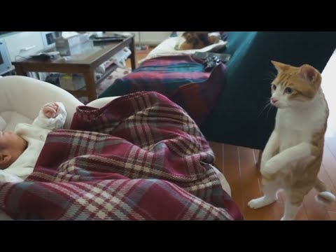 Кот впервые увидел младенца