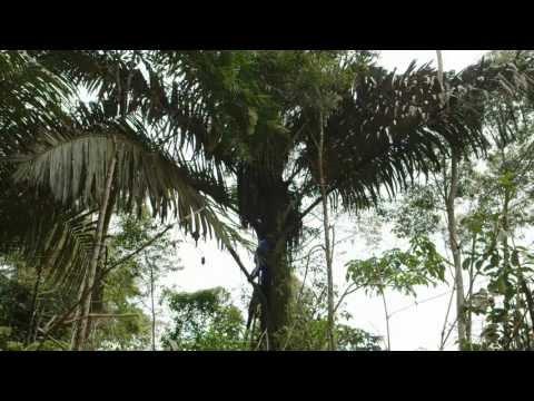 Village Hub - National Geographic short version