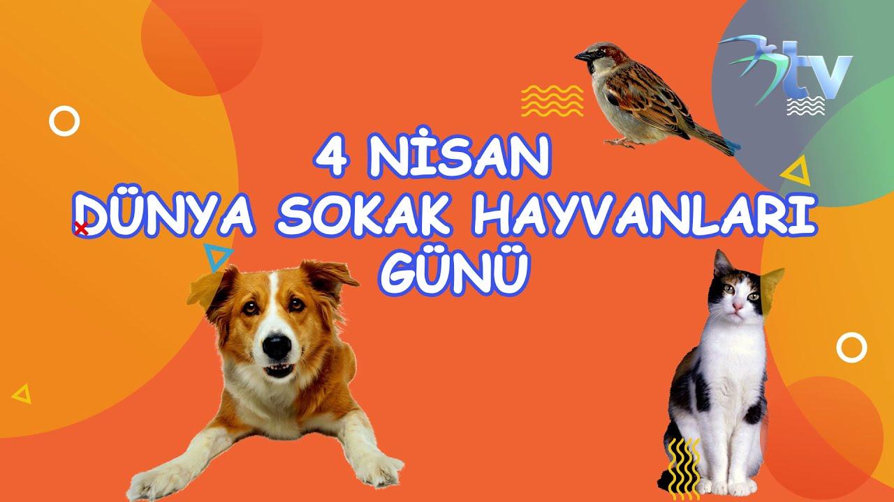 ORMAN KÖPEKLERİNİ BESLEDİK! Sokak Köpekleri Besleme ve Ziyaret #Thevet #dogrescue