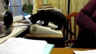 Кот писатель