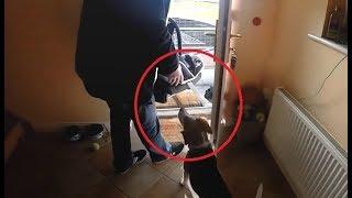 Pais entram com recém nascido em casa e a reação do cachorro surpreende