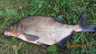 Размер рыб идёт на увеличение Рыбалка с берега на донки леща