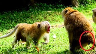 Terrify, Monkey fight serious so much cos monkey need more level , Power is more important
