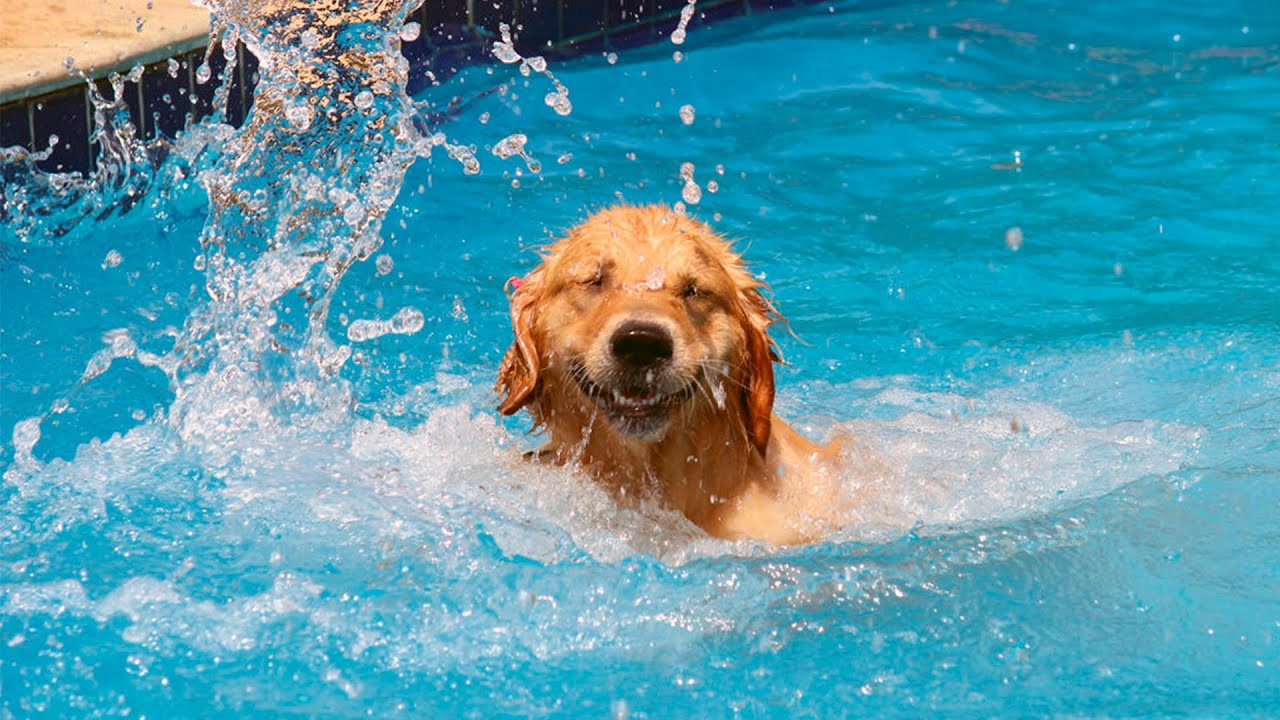 Image result for dog in water