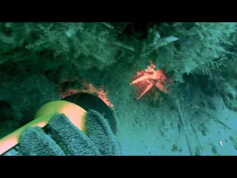 Spearfishing On Volusia's Natural Ledges