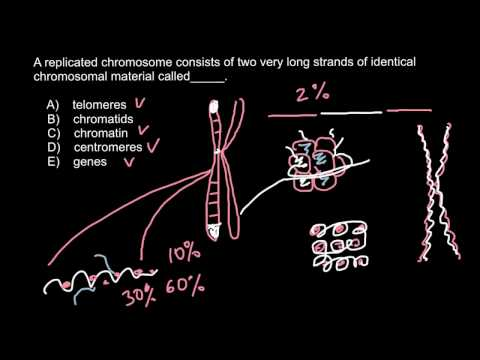 Telomeres, Chromatids, Chromatin, Centromeres, Genes