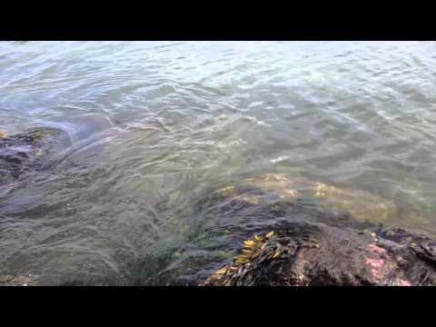 Pandora Music - Mind Like Water