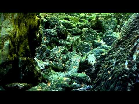 Cerknica - Zeleni kras (predstavitveni film SLO)